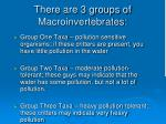 there are 3 groups of macroinvertebrates