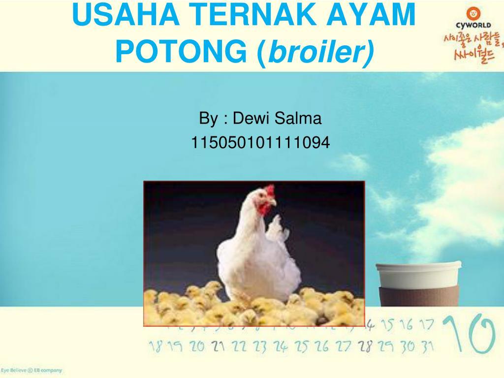 Ppt Usaha Ternak Ayam Potong Broiler Powerpoint Presentation