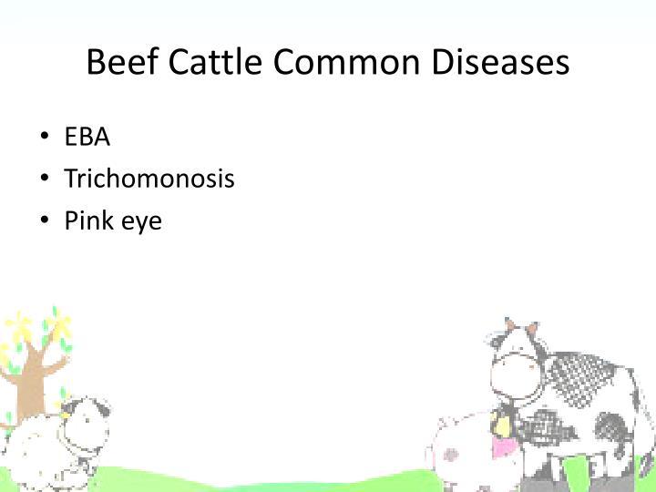 Beef Cattle Common Diseases
