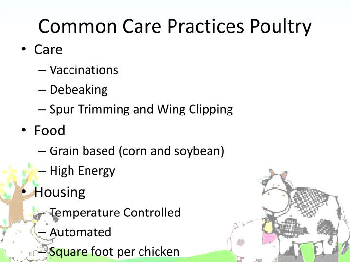 Common Care Practices Poultry