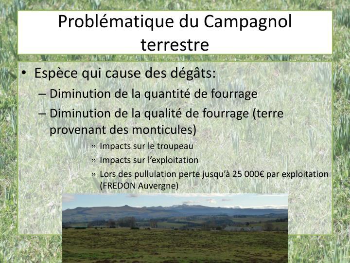Problématique du Campagnol terrestre