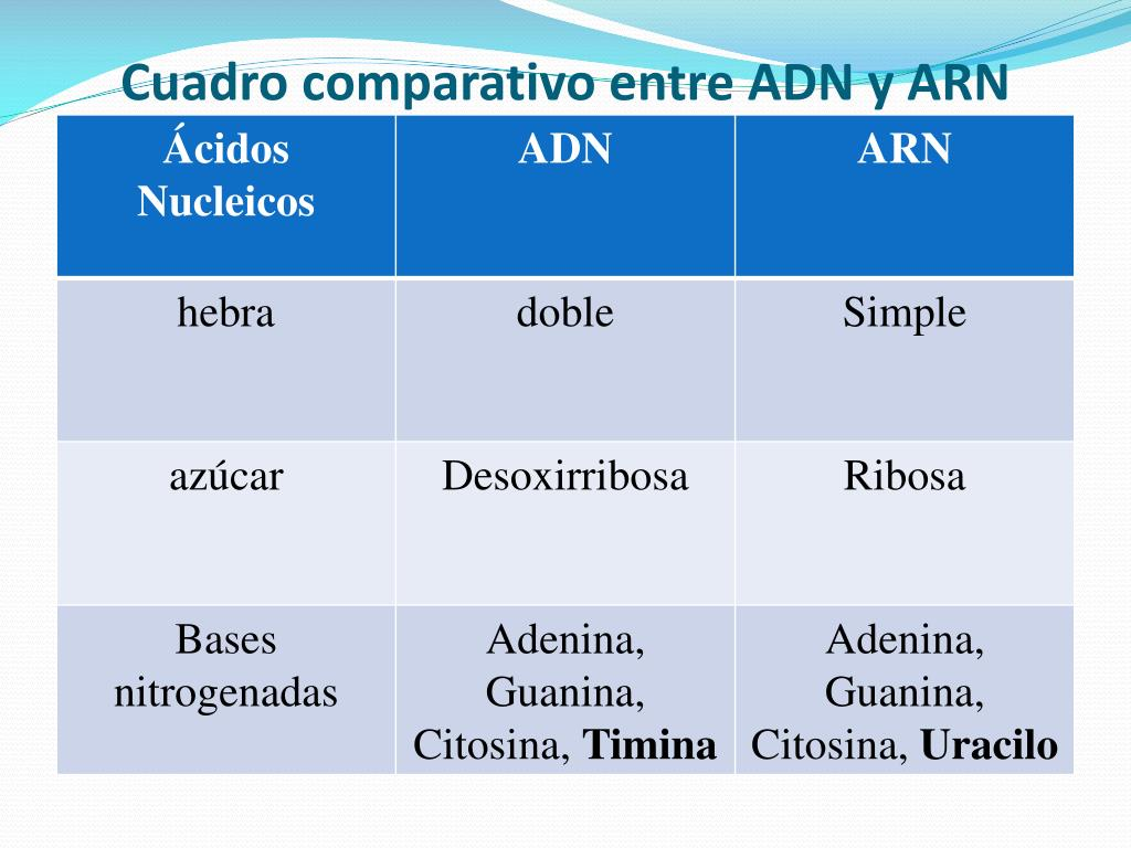Ppt ácidos Nucleicos Powerpoint Presentation Free Download Id 6957660