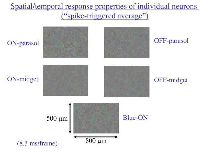 Spatial/temporal response properties of individual neurons
