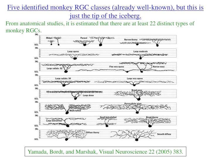 Five identified monkey RGC classes (already well-known), but this is just the tip of the iceberg.