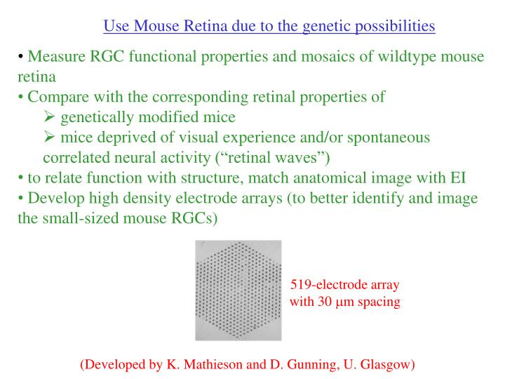 Use Mouse Retina due to the genetic possibilities