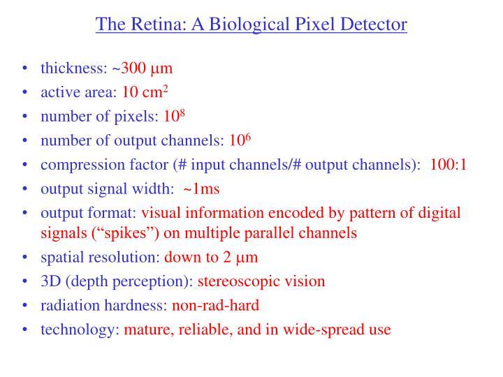 The Retina: A Biological Pixel Detector