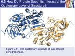 6 5 how do protein subunits interact at the quaternary level of structure1