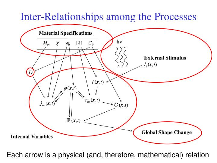 Inter-Relationships among the Processes