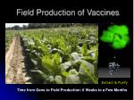 field production of vaccines