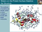 waters on the protein surface stabilize the structure
