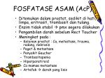 fosfatase asam acp