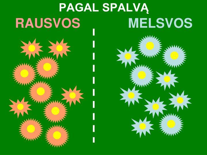 PAGAL SPALVĄ