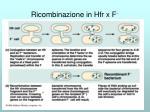 ricombinazione in hfr x f