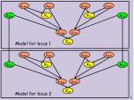 probabilistic model for two loci1