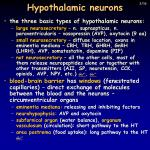 hypothalamic neurons