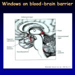 windows on blood brain barrier