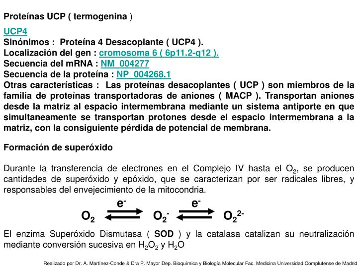 Proteínas UCP ( termogenina