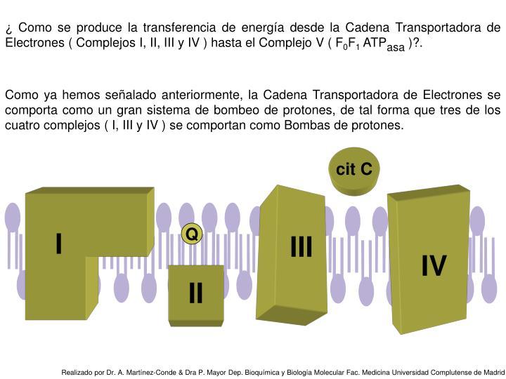 ¿ Como se produce la transferencia de energía desde la Cadena Transportadora de Electrones ( Complejos I, II, III y IV ) hasta el Complejo V ( F