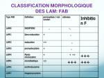classification morphologique des lam fab
