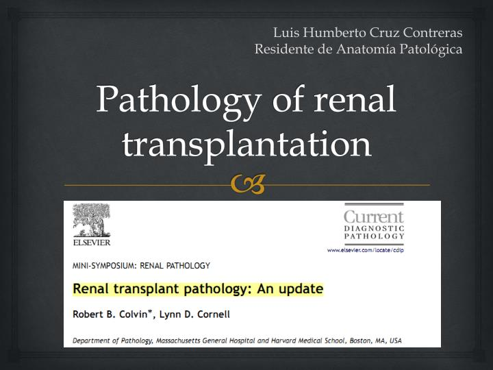 pathology of renal transplantation n.