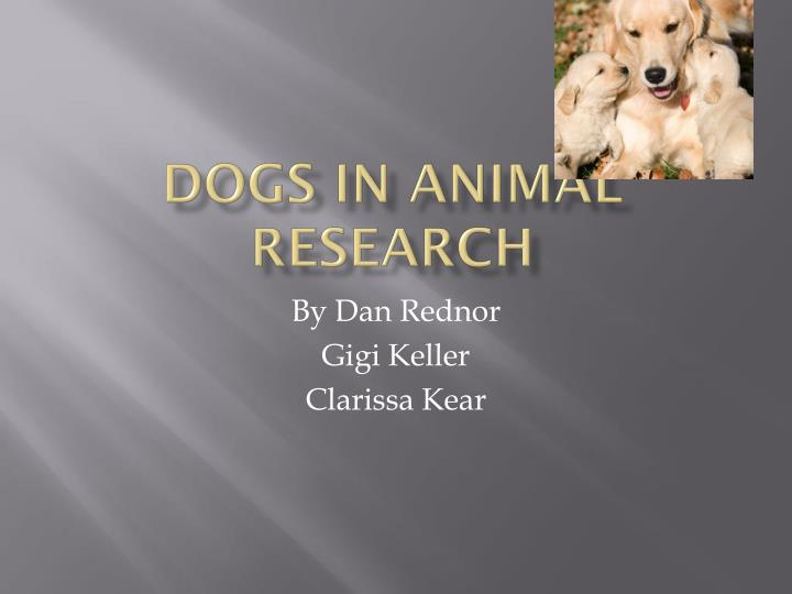 dogs in animal research n.