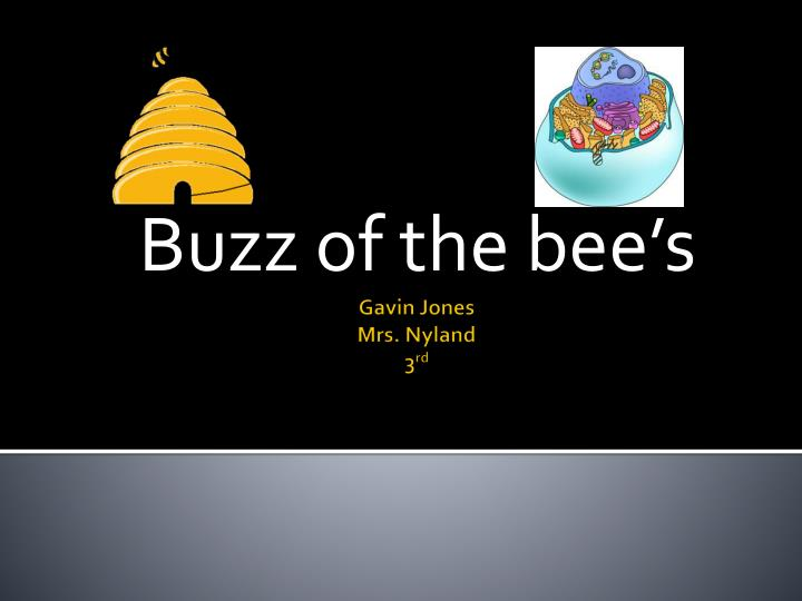 buzz of the bee s n.