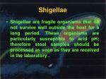 shigellae
