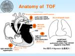 anatomy of tof