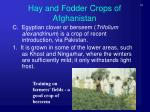 hay and fodder crops of afghanistan5