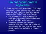 hay and fodder crops of afghanistan6