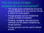how are grass forages established and maintained