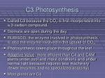 c3 photosynthesis
