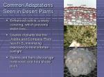 common adaptations seen in desert plants