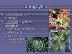xerophytes