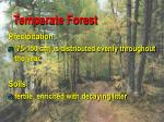 temperate forest3