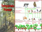temperate forest6