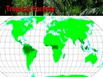 tropical forests2