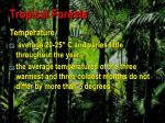 tropical forests3