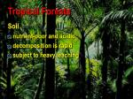 tropical forests5