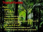 tropical forests6