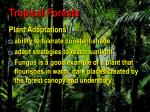 tropical forests7