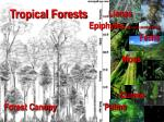 tropical forests8