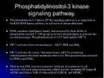 phosphatidylinositol 3 kinase signaling pathway