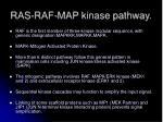 ras raf map kinase pathway