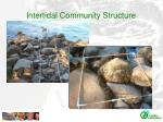 intertidal community structure