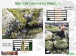 intertidal community structure2
