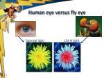human eye versus fly eye