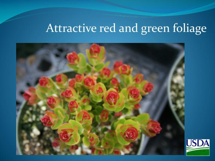 Attractive red and green foliage