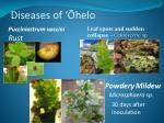 diseases of helo