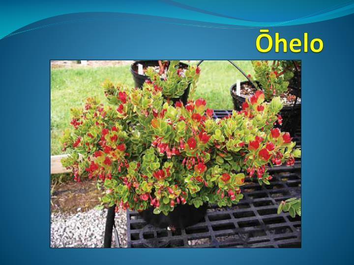 Ōhelo